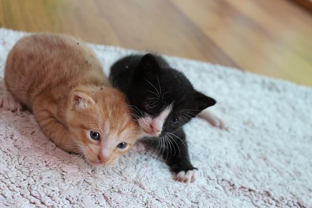 kitten-2328222_640